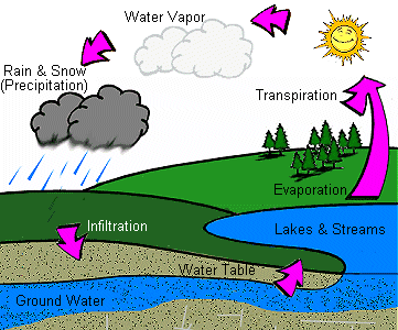 Cartoon Drawing of the Water Cycle